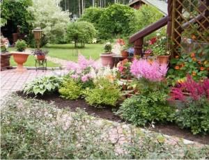 Древовидный пион Любимые цветы 1